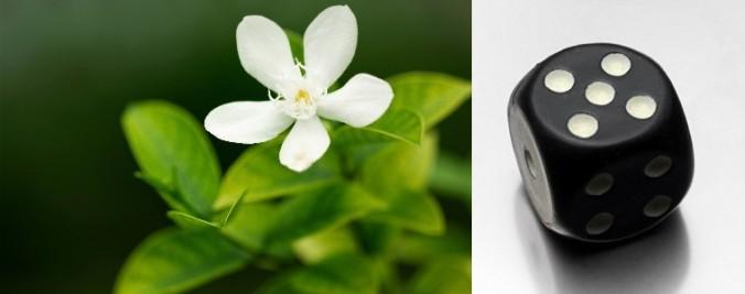 flower dice